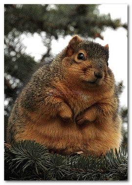 sono grassa test le cellule grasse non muoiono mai psiche e soma