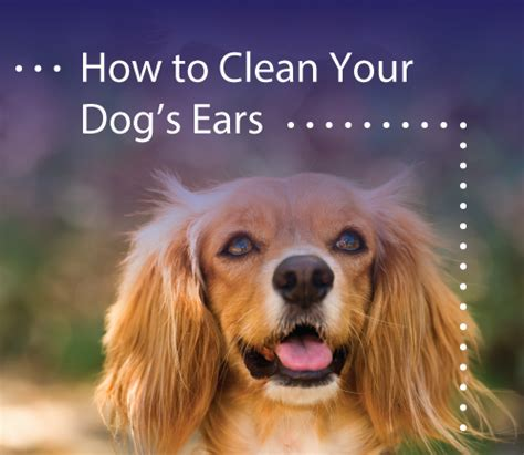 how to clean your s ears how to clean your s ears