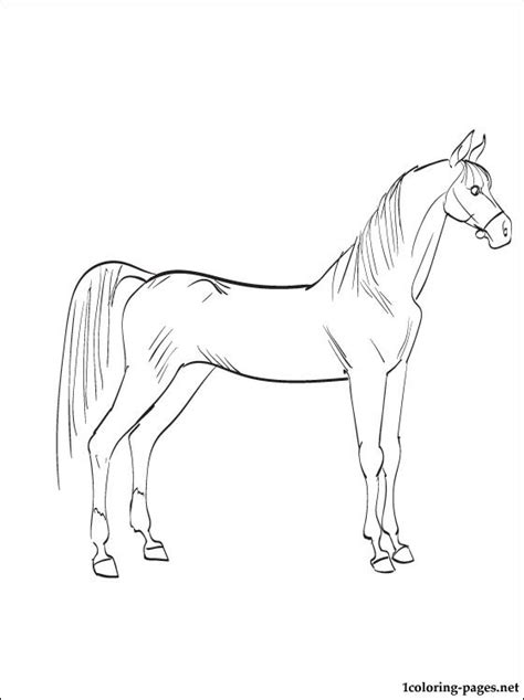 arabian horse coloring page coloring pages