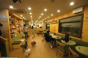 the dog house cafe paw some dog cafe in south korea allows canine lovers to play with more than a dozen