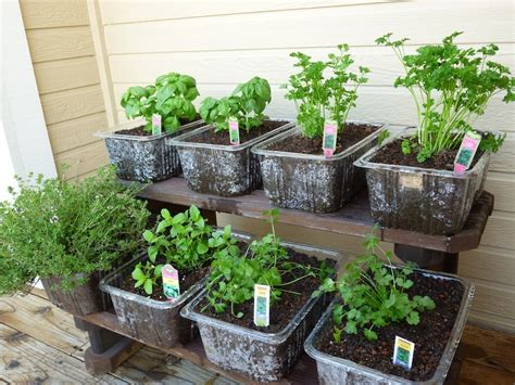 Plant Tubs Foods For Plant Your Own Herb Garden In