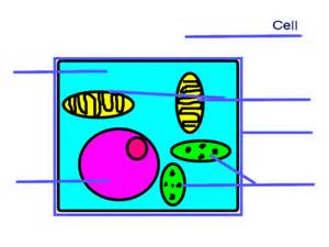unlabeled cell diagram cell diagram unlabeled choice image how to guide and