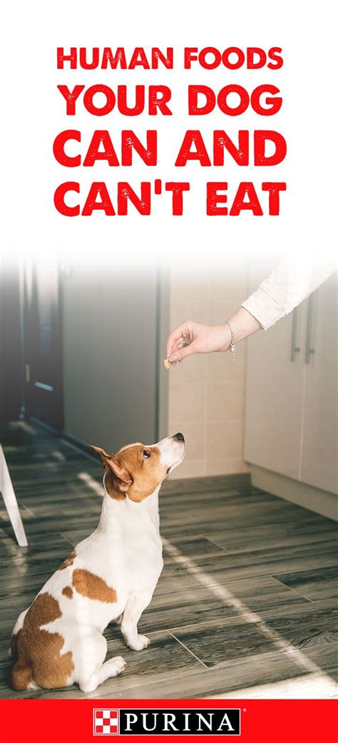 can dogs eat soy 25 best ideas about on puppy facts canned food and list