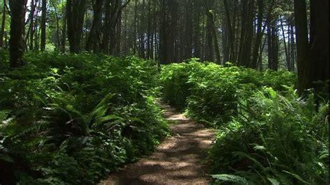 forêt tropicale / parc national olympique / etats unis