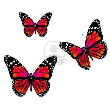 red butterfly species google search tattoos that are
