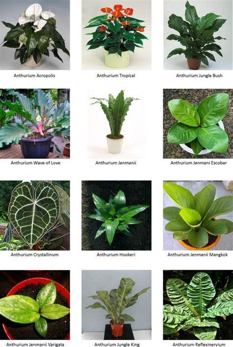 koleksi tanaman hias kawan abadi