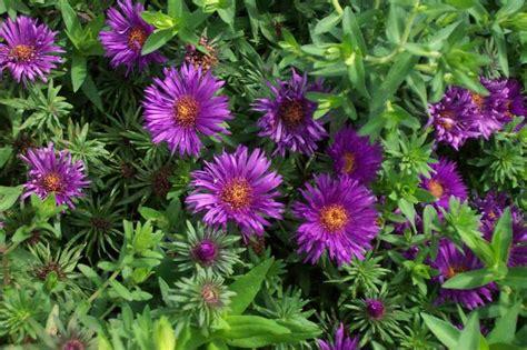 perennials for season long bloom