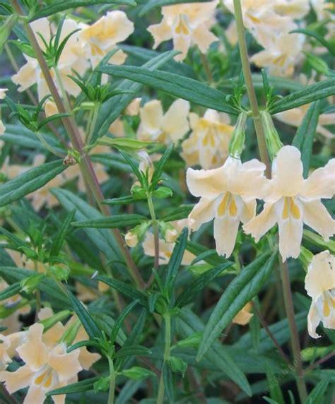 california plants that like part shade