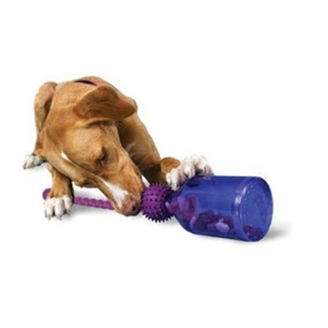 toys to keep dogs busy the 6 best toys to keep your really busy