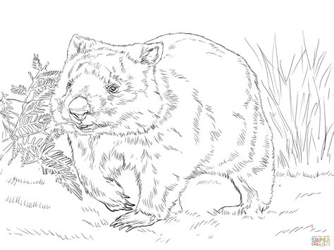 Common Wombat Coloring Page Free Printable Coloring Pages Wombat Coloring Page