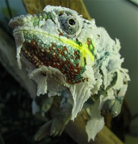 Is Shedding So Bad by New Jersey Veterinary