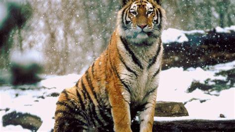 Ox Natgeo Wildd world s deadliest animals national geographic channel