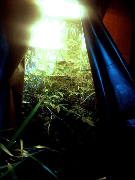 Growing In Closet by How I Became An All Organic Marijuana Grower