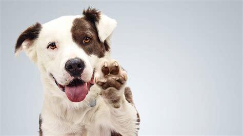 dogs for adoption ta adoption event at temple sholom on sunday oct 30 scotch plains fanwood nj news