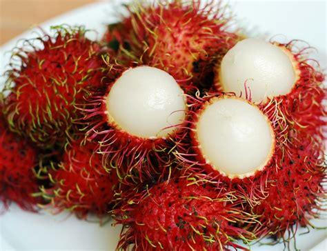 Bibit Jahe Merah Di Aceh jual bibit rambutan di simalungun jual bibit tanaman unggul