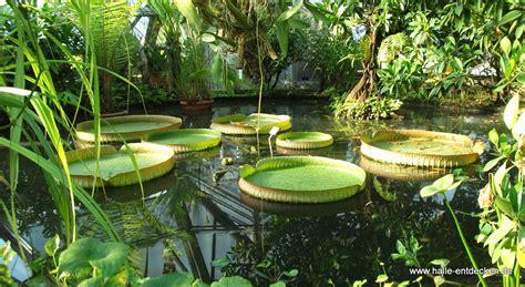 botanisches garten botanischer garten in halle saale www halle entdecken de