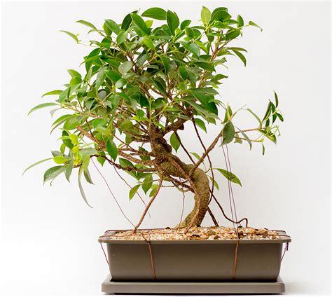 zimmerpflanzen schön dekorieren best gr 252 npflanzen f 252 r die wohnung gallery