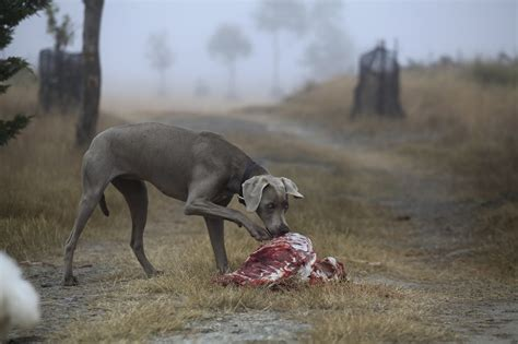 do dogs remember their puppies what do lost dogs eat lost dogs of america