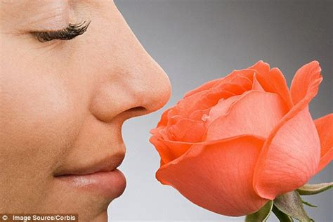 could a genetic tweak give roses back their perfumed smell daily mail online