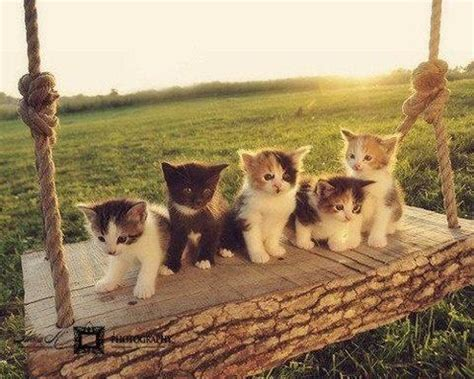 swing cat kittens on a swing so sute cats pinterest