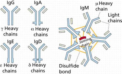 m protein vs igm glossary i