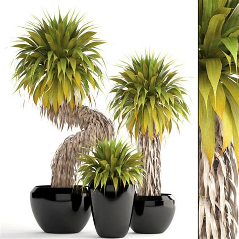 Tropical Yucca Plant by Collection Of Tropical Plants Yucca 3d Cgtrader