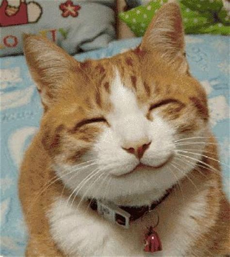 Smiling Cat Meme - happy cat smiling blank template imgflip