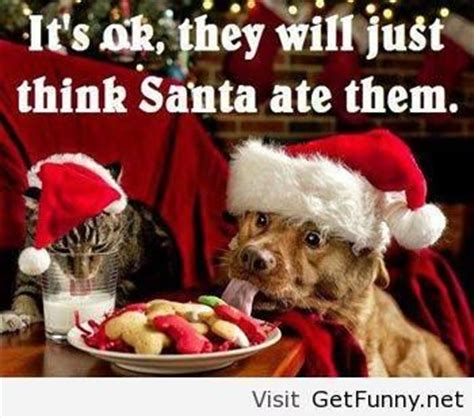 Christmas Animal Meme - funny christmas dog and cat cat pictures