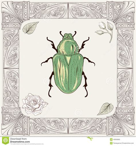 roses rose buds and ornate chafer beetle drawing stock vector image 40056665