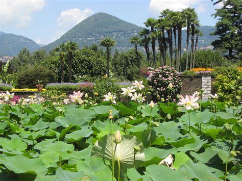 Garden Wiki File Lotus Garden Villa Taranto Botanical Gardens Jpg