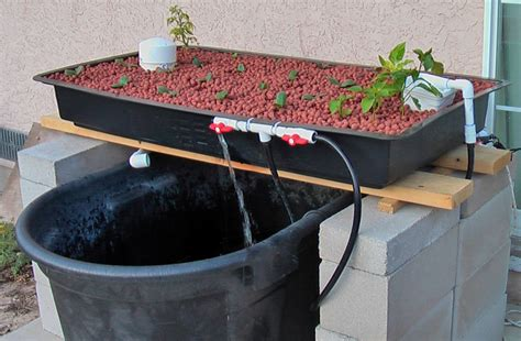 backyard aquaponics system how to build a cheap aquaponics system from your own home