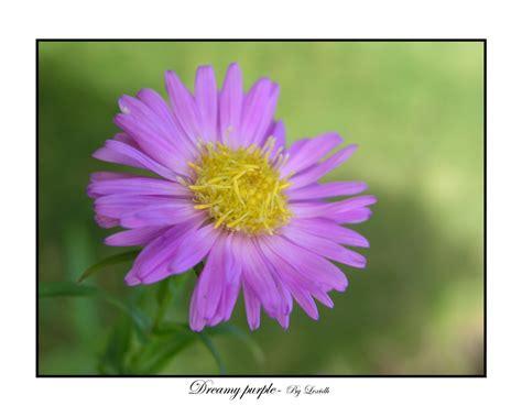 Dreamy Purple dreamy purple by lexidh on deviantart