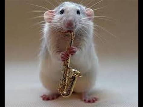 imagenes de ratas halloween eliminar ratas y ratones con dos sorprendentes m 233 todos