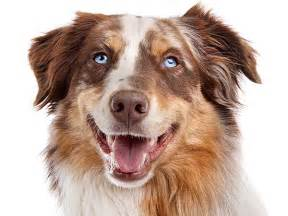 puppy bad breath understanding bad breath