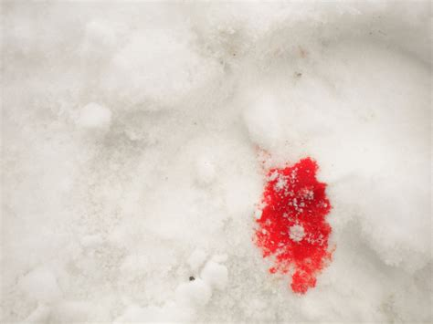 blood on snow blood on the snow by diegokid on