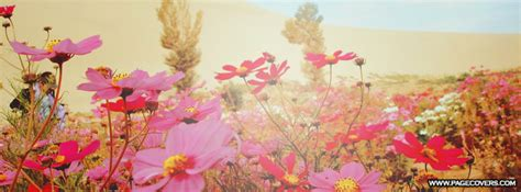Pretty Covers Pretty Flowers Pretty Flowers Cover