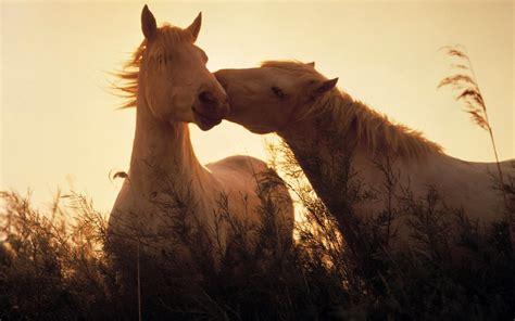 wallpaper for desktop of horses uncategorized beautiful cool wallpapers