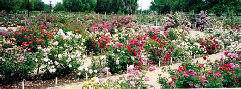 gardening photos gardening in the valley of heart s delight panoramics of