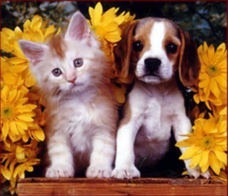 cute kitten  puppy  cute kitties pinterest