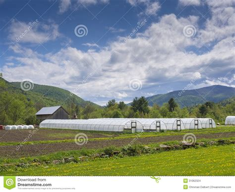 country side green house greenhouses in countryside stock images image 31062324