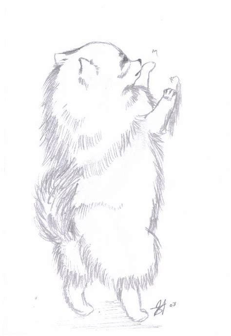 pomeranian drawing pomeranian by shadowkero on deviantart