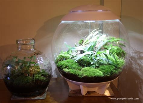 garden in a bottle planting list for biorbair and traditional terrariums