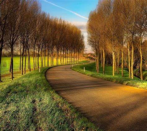 wallpaper sunlight trees landscape forest hill