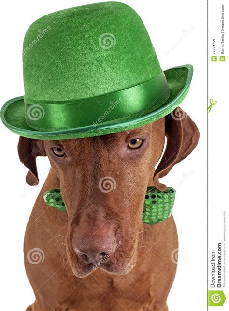 dogs with green with green hat stock photos image 29881753