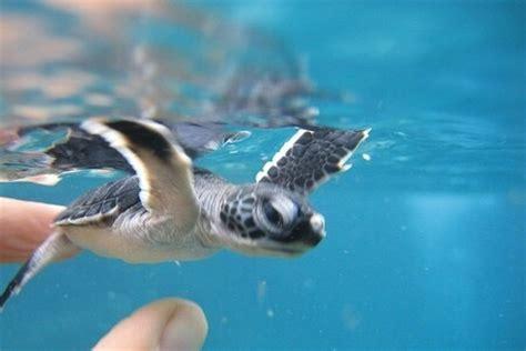Mainan Play Sand Animal Paradise 2048 tropical beaches with sea animals