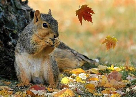 libro animal seasons squirrels autumn 390 best animals in autumn images on adorable animals amazing nature and antlers