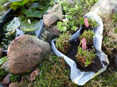 Welche Pilze Wachsen Im Garten Auf Der Wiese by P1010275 Phlora De