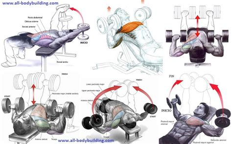 the best dumbbell chest exercises all bodybuilding