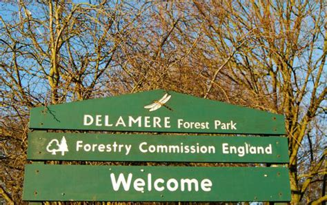 christmas trees delamere working on the verge delamere forest