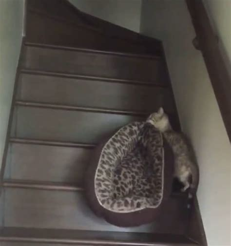 cat stairs for bed cat steps for bed driverlayer search engine